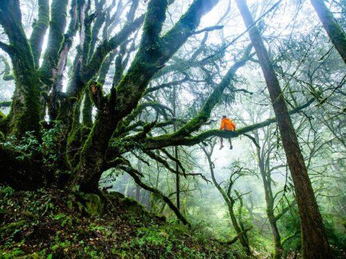 Gli alberi ed i loro messaggi