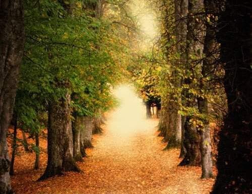 Il viale degli alberi
