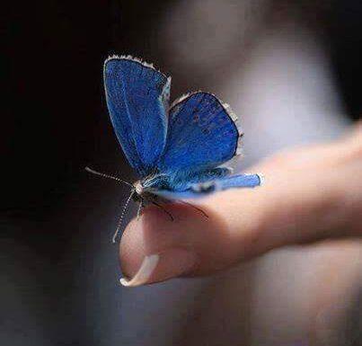 Imparare dalle farfalle