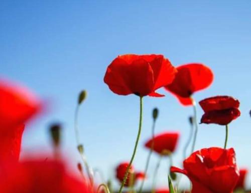 25 Aprile, un fiore che affonda le sue radici nella libertà