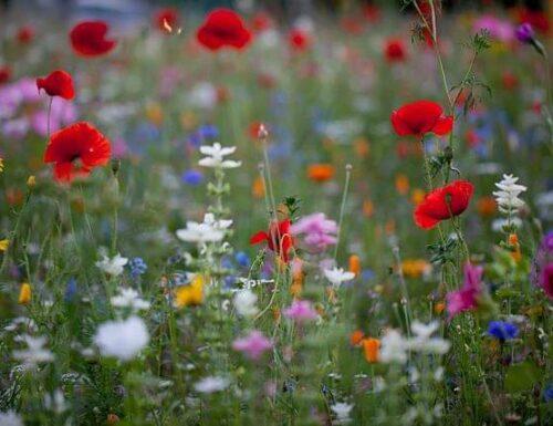 Imparare dai fiori di campo