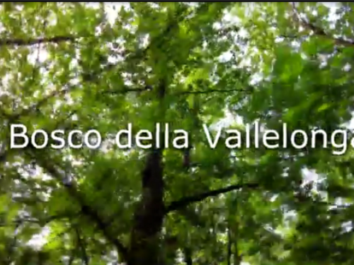 Il bosco della Vallelonga