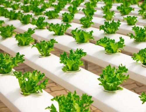 Tra le sfide ambientali per la salvaguardia del pianeta, l'agricoltura idroponica
