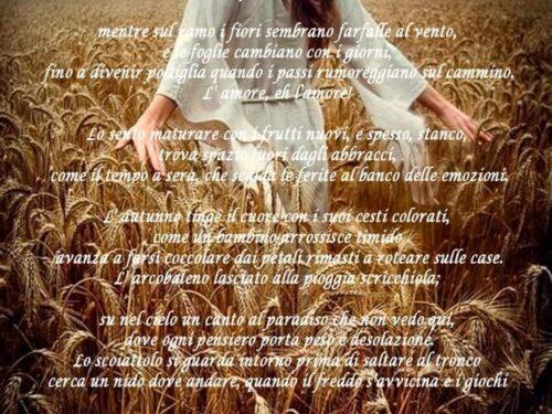 Il raccolto dell'amore
