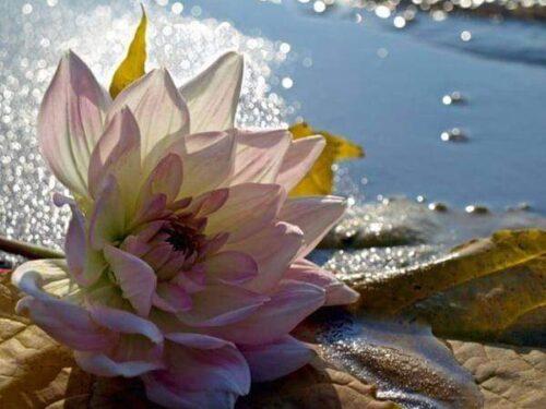 Non si può annientare la fragranza di un'emozione