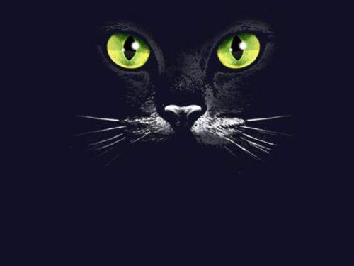 A me gli occhi: l'importanza dello sguardo
